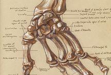 hands, legs....
