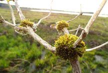 Natur PUR / Interessantes & Merkwürdiges was irgendwie und irgendwo da draußen lebt... :)