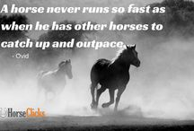 Horse Quotes / A collection of horse quotes and memes. / by Horseclicks