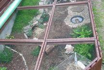 Habitat de la tortue