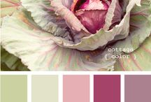 Color Inspiration / by Jill Wiseman