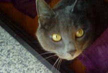 CATS&...