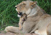 oohh, aaww, wow!! animals / by Tonya Sharp