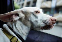 モグ(Mogu) / 元保護犬のモグです。 / by Ken-ichi Nishi