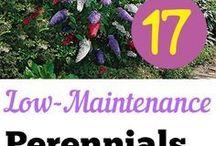 Garden Perennials