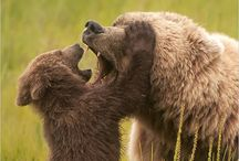 Animal Photos / by Robert Muhlig