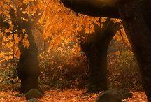 Fall  / by Britt Brown