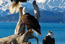 Eagles / America's Bird / by True Martial Artist