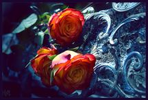 Roses / These pins are reflecting personal interest. I don't claim copyright or ownership of any content on this board. I give proper credit whenever possible. If work posted here is yours, please let me know and I will happily credit you or will remove the image.