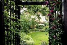 Trädgård - Pergola