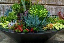Outdoor ideas for garden setting / Build