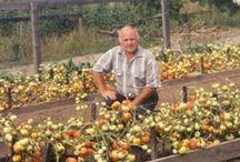 Овощи выращивание