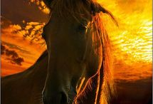 Horses / by Colleen Smith