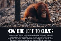 Primate Save Primate {:(|) / Love and Save them from Extinction