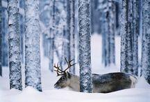 I Love Winter.!! <3