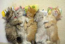 Too friggin cute! / by Amanda Flynn