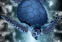 morské zvierata