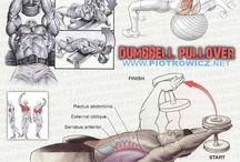 Anatomie sport