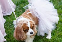Dog Flower Girl Outfits