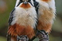 Feathered Beauties