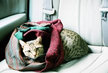 My Cats / アトムとドラミの写真