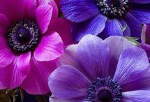 wikd flowers