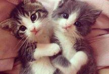 Súper cute