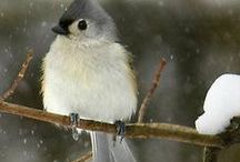 Natural world - birds