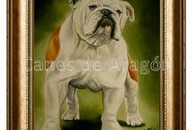 Pet portraits / Retratos de mascotas por encargo. Autor: Alexander Restrepo González. Medellín-Colombia.