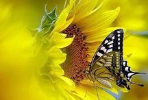 Sunshine / Pretty Yellow Stuff / by Debbie Wutsch-Chamberlain