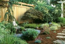 Low maintenance landscape