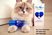 Distributor Blue Swan / 08170841296,parfum pria favorit, parfum wanita terlaris, parfum wanita terbaik, parfum wanita favorit, parfum wanita paling wangi parfum wanita tahan lama, parfum wangi, parfum wanita murah, parfum wanita yang wanginya enak dan tahan lama