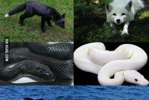 Albinism,Melanism,Vitiligo
