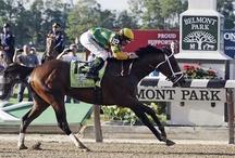 Thoroughbred Horse Racing
