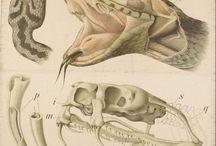 Illustrazione scientifica