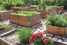 Piha ja puutarha / Haaveita ja toteutuneita unelmia omassa pihassa ....