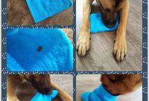 Dog enrichment