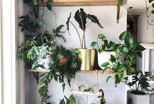 rośliny doniczki
