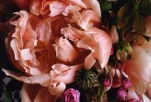 Florals / by Jennifer Villeneuve