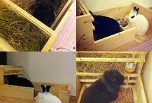 Akcesoria dla królika / Akcesoria dla królików