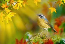 Beautiful birds / Little birds
