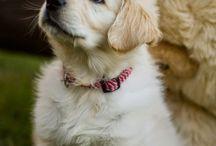 Animals / Just some pictures of cute animals. / Gewoon wat plaatjes van schattige dieren