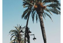 Palmtrees in Sitges'