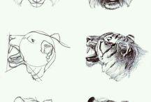 Tiger/Løver.