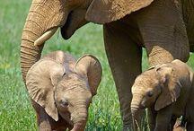 Animal Family Beauty