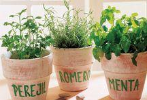 Plantas aromáticas / Ideas