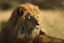 Ban Trophy Hunting / by Hilary Sontag