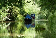 Boats / Boats on the Chesterfield Canal - Trust boats and other boats, we're not picky!