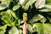 Tee Eis am Stiel / An warmen Tagen im Sommer darf ein Eis am Stiel nicht fehlen. Hier findest Du Rezeptideen für selbstgemachtes Eis aus Tee!  http://treeoftea.de/rezeptideen-aus-tee