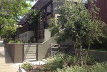 Drought Resistant / Bay Area drought resistant garden ideas